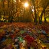 Sunburst Through Autumn Forest - Yosemite National Park, California