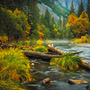 Along Merced River Near Valley View - Yosemite National Park, Eastern Sierras, California