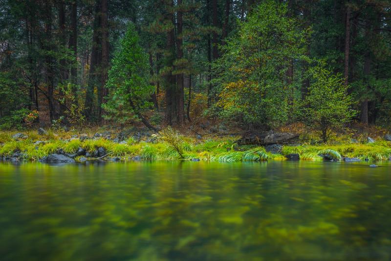 Water Level Along Merced River - Yosemite National Park, Eastern Sierras, California