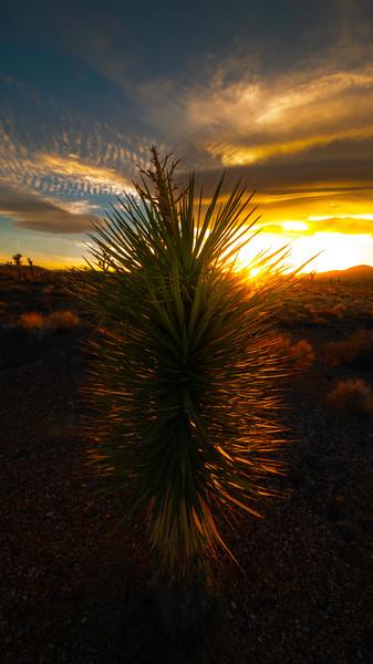 Rim Light In Lee Flats - Death Valley National Park, Eastern Sierras, California