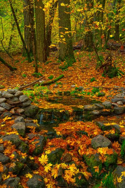 Fern Springs In Autumn Yosemite - Yosemite National Park, Eastern Sierras, California