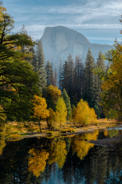 Yellow Tree Light From Sentinel Bridge - Lower Yosemite Valley, Yosemite National Park, California