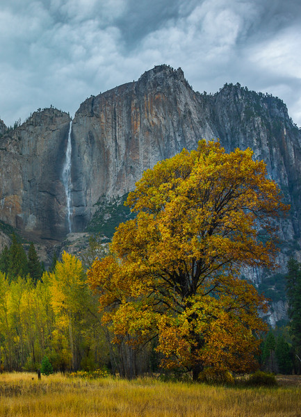 Upper Yosemite Falls From Swing Bridge Meadow_Vertical - Yosemite National Park, Eastern Sierras, California