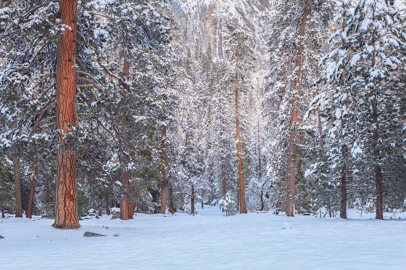Yosemite Winter Forest