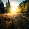 Sunburst Through Trees In Cooks Meadow - Yosemite National Park, California