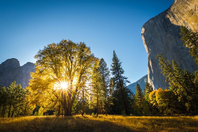 Sunburst Through Elm Tree Below El Cap - Yosemite National Park, Eastern Sierras, California