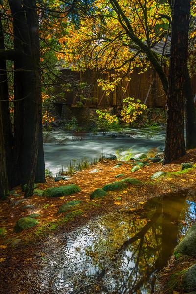 Rain Reflections Along Trail For Wawona Covered Bridge - Yosemite National Park, Eastern Sierras, California