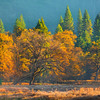 First Of The Warm Light In Cooks Meadow - Lower Yosemite Valley, Yosemite National Park, CA
