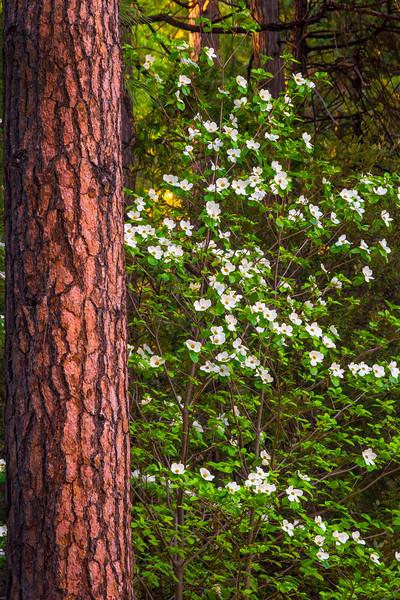 - Yosemite National Park, Eastern Sierras, California