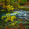 Alongside The Creek At Pohono Bridge - Yosemite National Park, Eastern Sierras, California