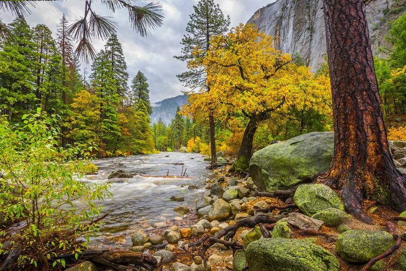 Looking Down Merced River From Bridalveil Pulloff - Yosemite National Park, Eastern Sierras, California