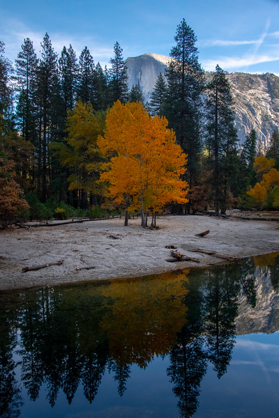 Half Dome And Solo Tree Reflected In Merced At Stoneman - Lower Yosemite Valley, Yosemite National Park, California