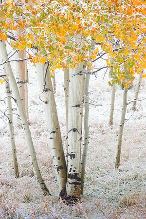 An Umbrella Of Color Under The Snow - Maroon Bells-Snowmass Wilderness, Aspen, Colorado