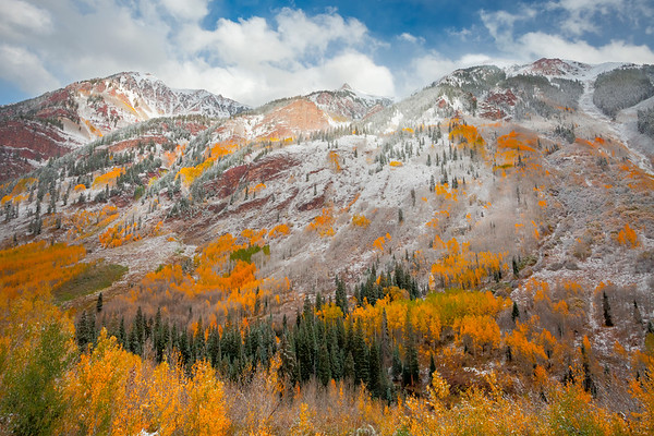 A Mix Bag Of Colors Outside Aspen - Maroon Bells-Snowmass Wilderness, Aspen, Colorado