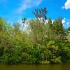 The Foliage Along The Everglades - Everglades National Park, Florida