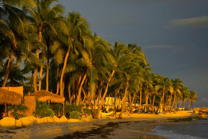 Last Light On The Palms In Key West - Key West, Florida Keys, Florida