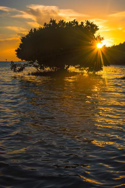Sunburst On Edges Of Mangrove -  Key Largo, Florida Keys, Florida