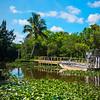 Everglades Safari Swamp - Everglades National Park, Florida
