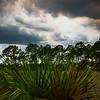 Everglades In Spring Afternoon - Everglades National Park, Florida
