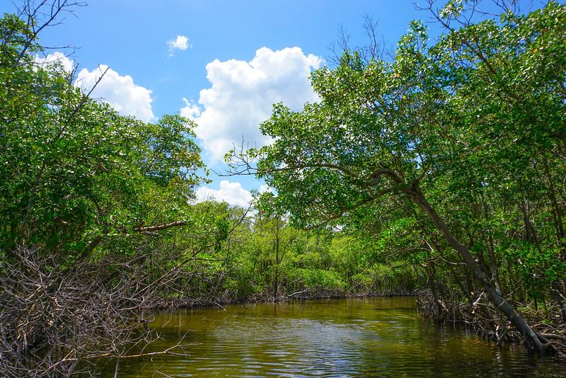 Depp Into The Everglades Swamps - Everglades National Park, Florida