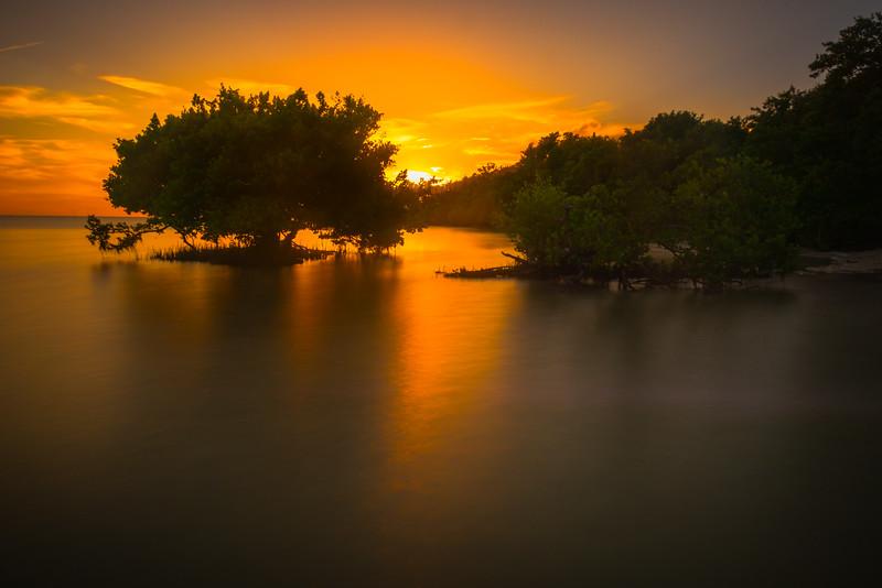 Mangroves Under Sunset Of Fire -  Key Largo, Florida Keys, Florida