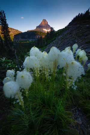 Beargrass Presenting Itself Along The Hill - Going To The Sun Road, Glacier National Park, Montana