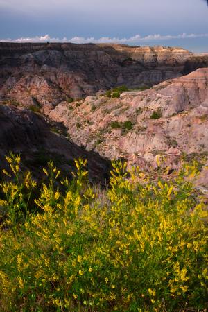 Overlooking The Sweet Clover Into The Canyon - Makoshika State Park, Glendive, Eastern Montana