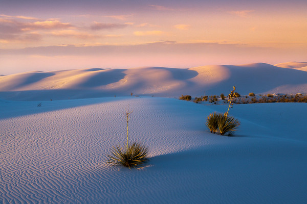 Sunset Mood Over The Dunes And Light On Yuccas - White Sands National Monument, New Mexico