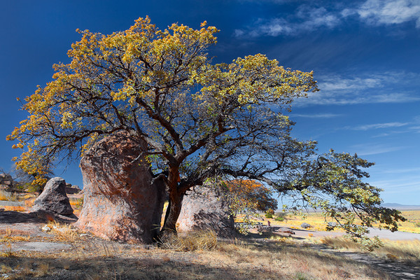 Images from around the state of New Mexico