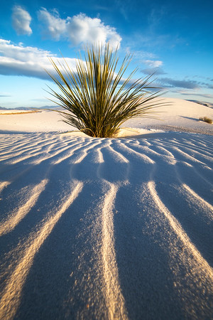 Curvy Lines From The Ground Leading Into Yucca - White Sands National Monument, New Mexico
