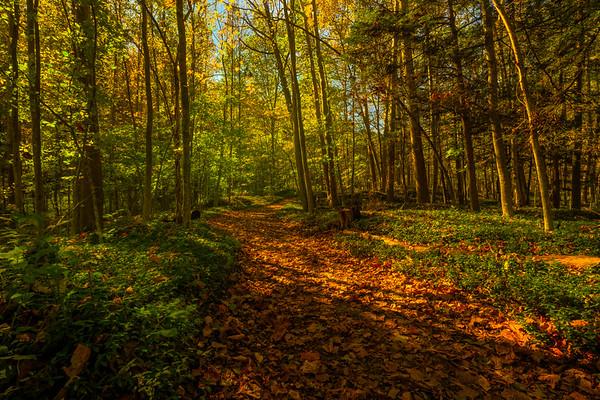 An Autumn Walk Through Robert Treman Park- Robert Treman Park, Finger Lakes Region, Upstate NY, NY