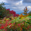The Blue Ridge Parkway - Great Smoky Mountain Region, North Carolina_13