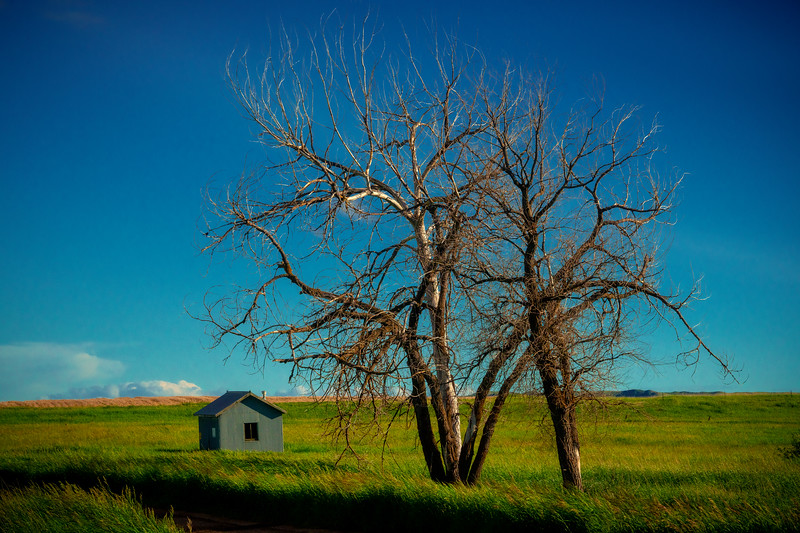 The Bareness Of A Solo Tree - Marmath, North Dakota