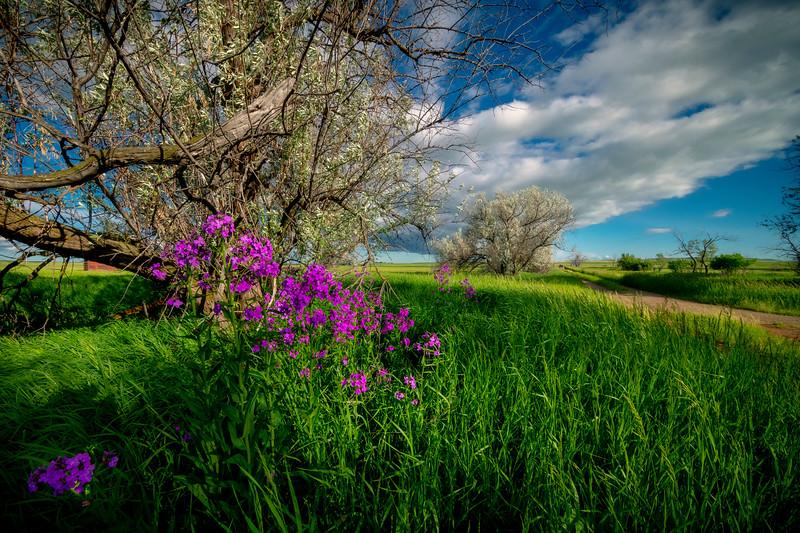 A Spring Awakening On The Old Dirt Road - Rhame, North Dakota