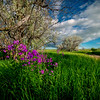 A Spring Awakening On The Old Dirt Road - Rhame, North Dakota