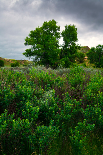 Spring Foliage In Badlands - Theodore Roosevelt National Park, North Dakota