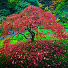 Japanese Gardens, Portland, Oregon_14