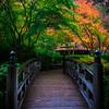 Japanese Gardens, Portland, Oregon_5