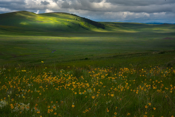 Balsam Root Layers On Higher Ground Of Prarie Wallowa County, Oregon
