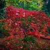 Japanese Gardens, Portland, Oregon_13