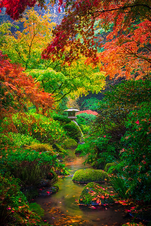 Colors That Surpass Expectations - Portland Japanese Garden, Oregon St