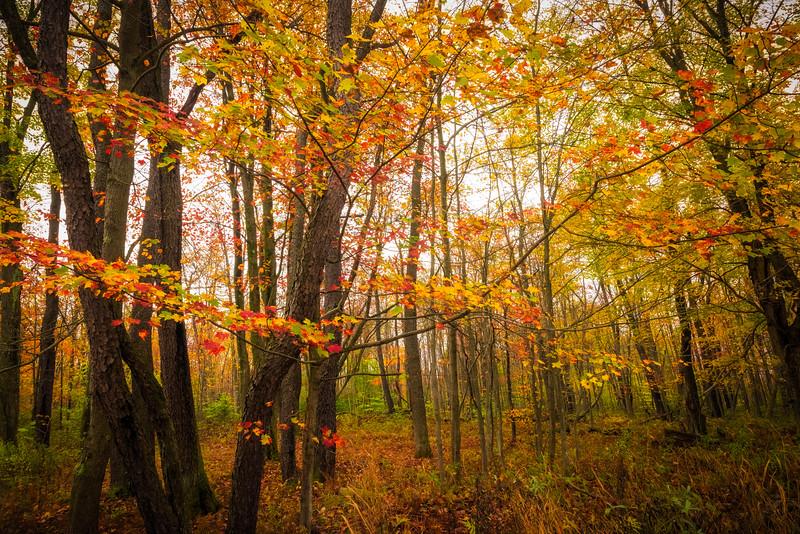 Fog Mist Mystery In The Allegheny Forest - Allegheny Mountain Range, Pennsylvania