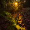 Last Light Showcase The Autumn Foliage-Ricketts Glen State Park,  Benton, Pennsylvania