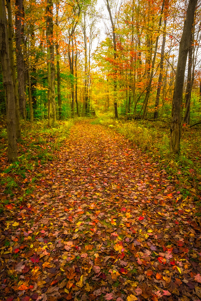 Walking Into The Peak Colors - Allegheny Mountain Range, Pennsylvania