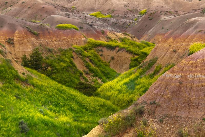 Sweet Clover Inside The Valley Tunnels - Badlands National Park, South Dakota