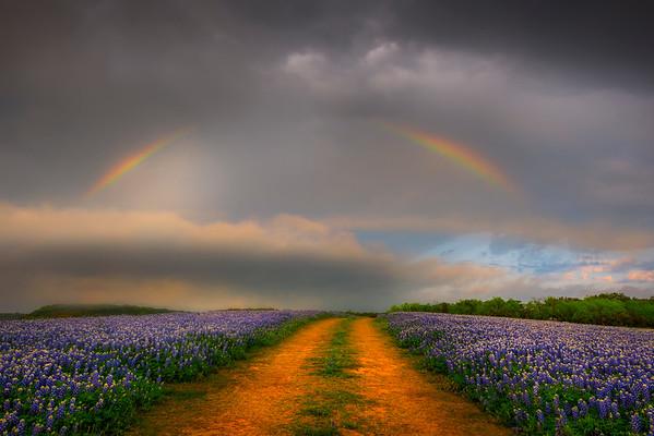 Rainbow And Blue Bonnets - Spicewood, Texas