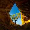 Tree In The Cave