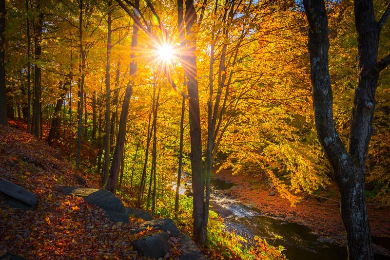 Sunburst Shining Down On Hiking Trail - Vermont