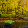 Golden Yellow Colors Streamside - Vermont