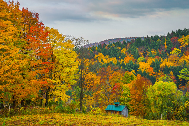 Cabin In Autumn Woods - Vermont